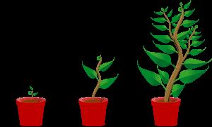 growing-trees-hi