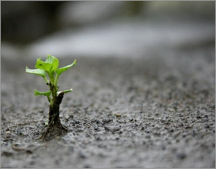 Resilience:Becoming Comfortable with the Uncomfortable